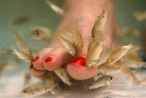 feet eating fish
